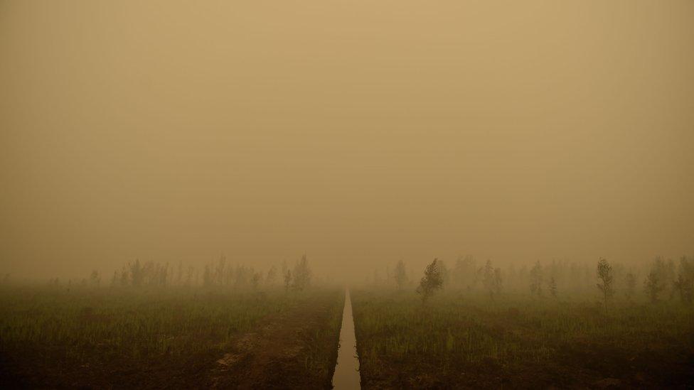 A smoke filled skyline in Kalimantan, Indonesia