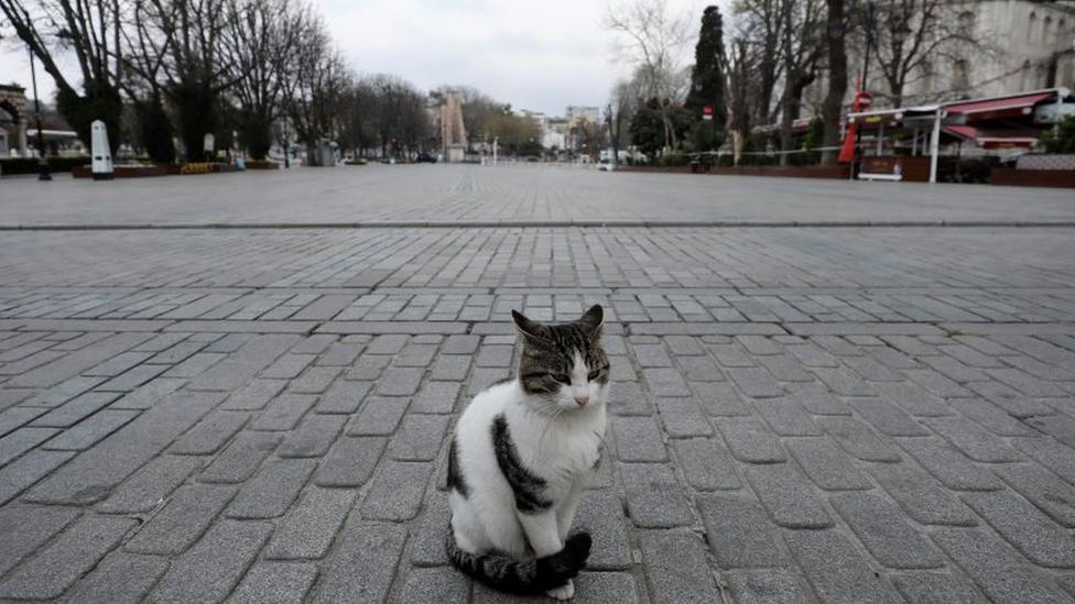 mačka na trgu sultana ahmeta u istanbulu