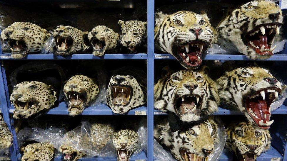 Seized wildlife trafficking goods