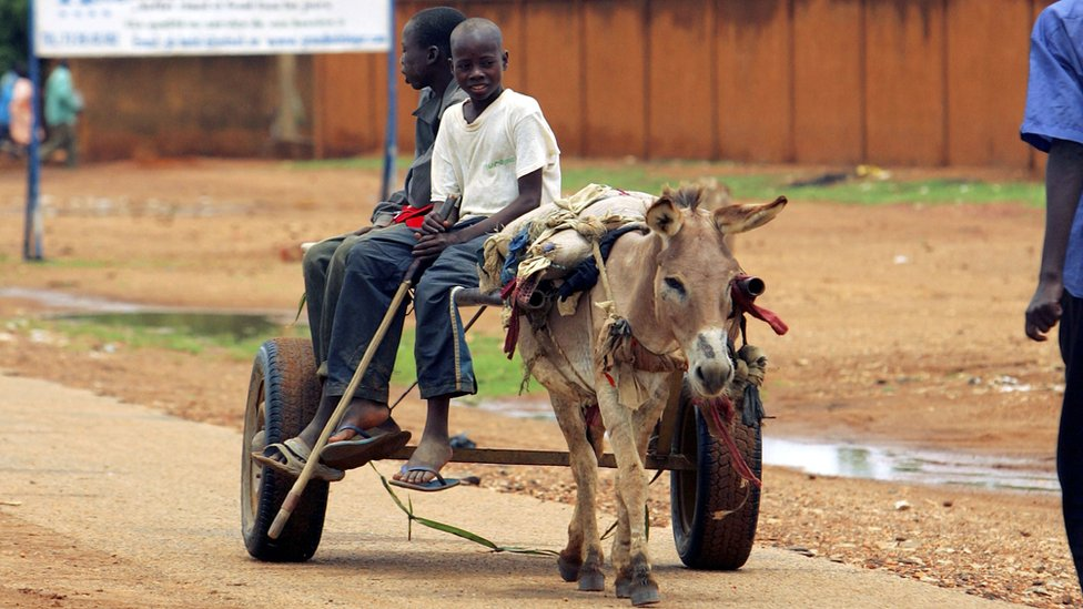 A donkey pulling a cart in Niger
