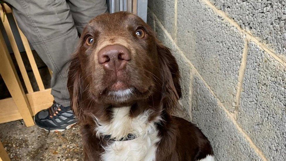 Missing dog Clodagh found by police during raid