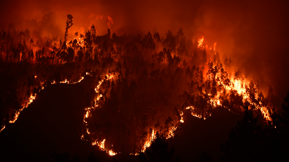 Incendio en Portugal en junio de 2017