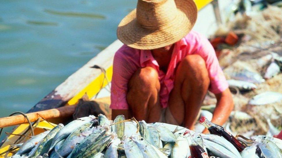 حظرت سيشل أنشطة الصيد في ما يقارب نصف محمياتها البحرية في المحيط التي تمتد إجمالا على مساحة تتجاوز مساحة ألمانيا