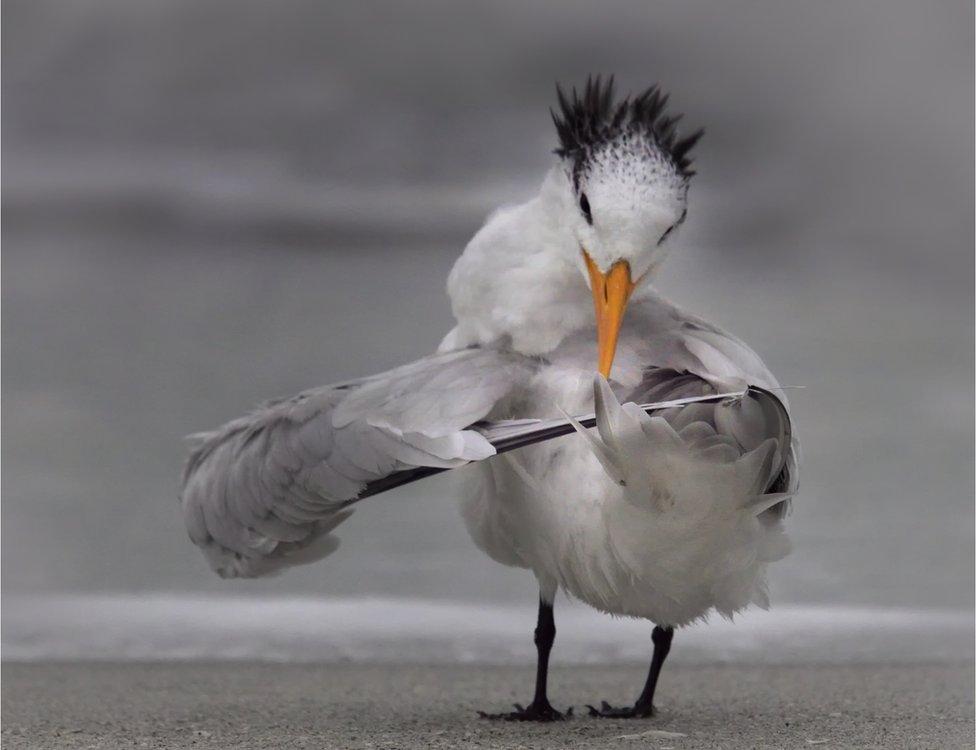 A bird ruffling its wings