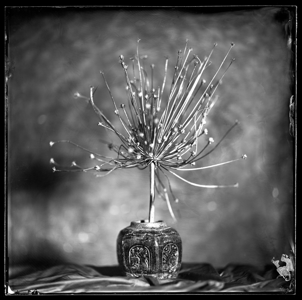Black and white still life image of a spiky object