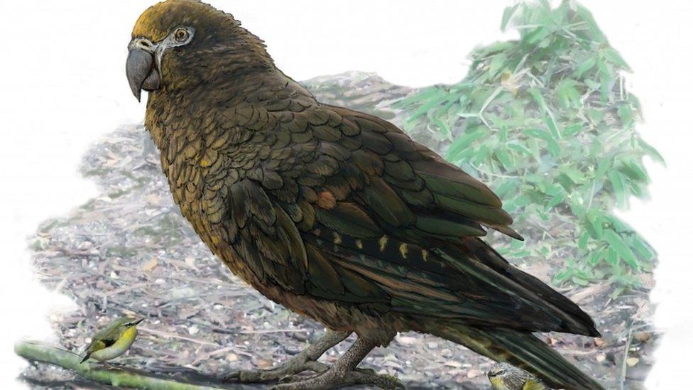 Gambar artis burung nuri terbesar di dunia
