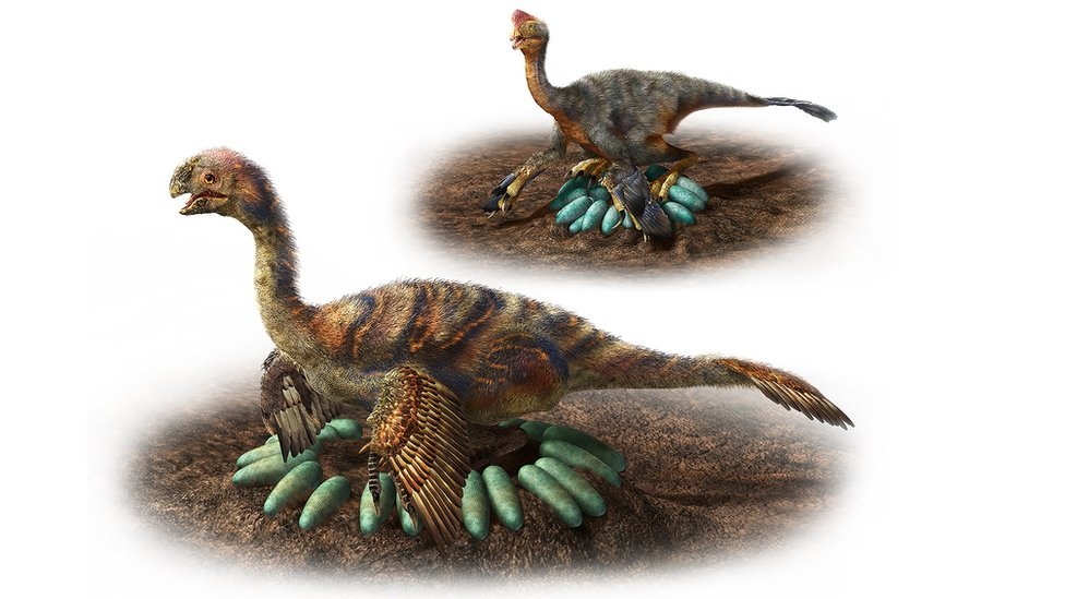 Two oviraptorosaurs sitting on clutches of eggs - in the foreground, the larger dinosaur has its eggs arranged around itself, in the background the smaller dinosaur sits on top of its eggs