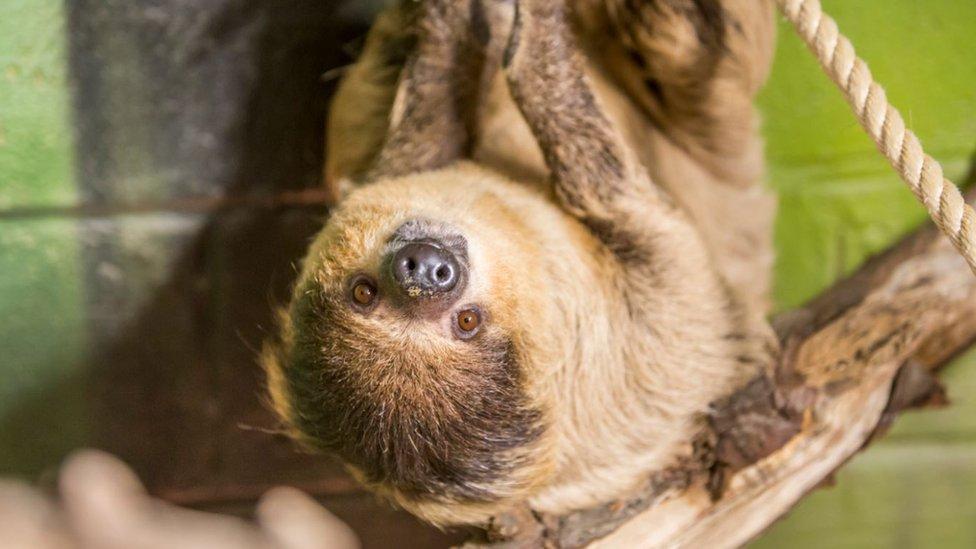 A sloth