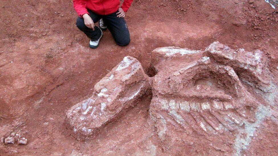 Excavaciones de los huesos de Ingentia prima
