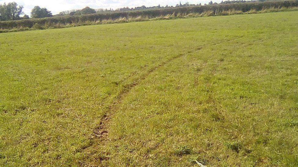 Wilburton sheep killed by vehicle 'playing skittles'