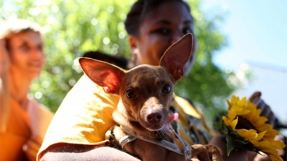 Cubans march against animal cruelty, in what is thought to be the first independent demonstration allowed in the country