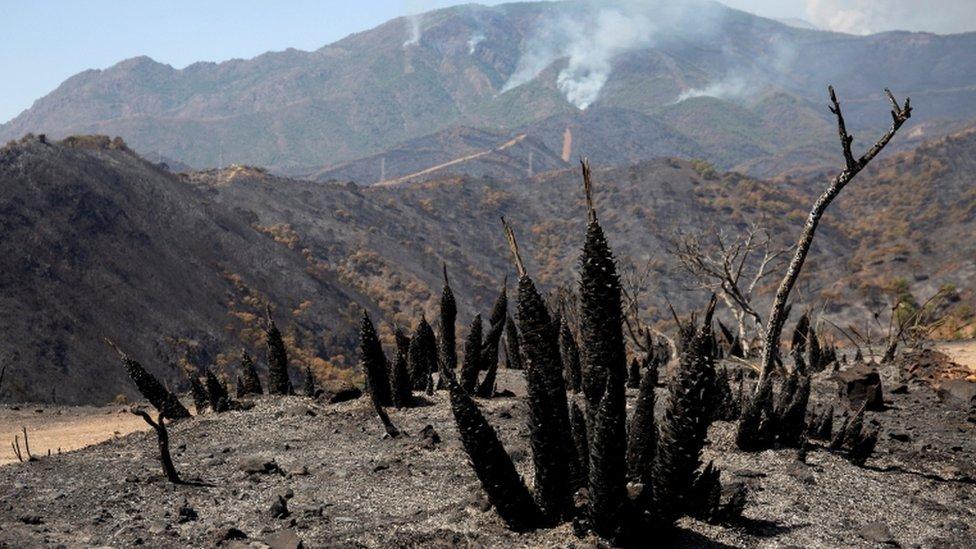 Posledice požara u Sijera Bormehi kod Malage u Španiji