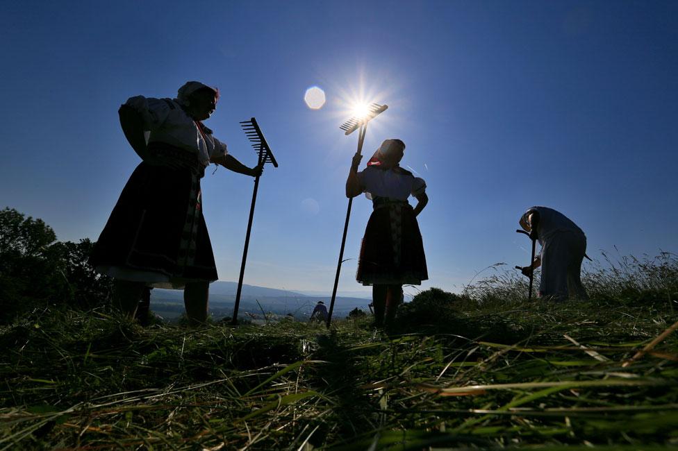 Women harvesting in Moravia