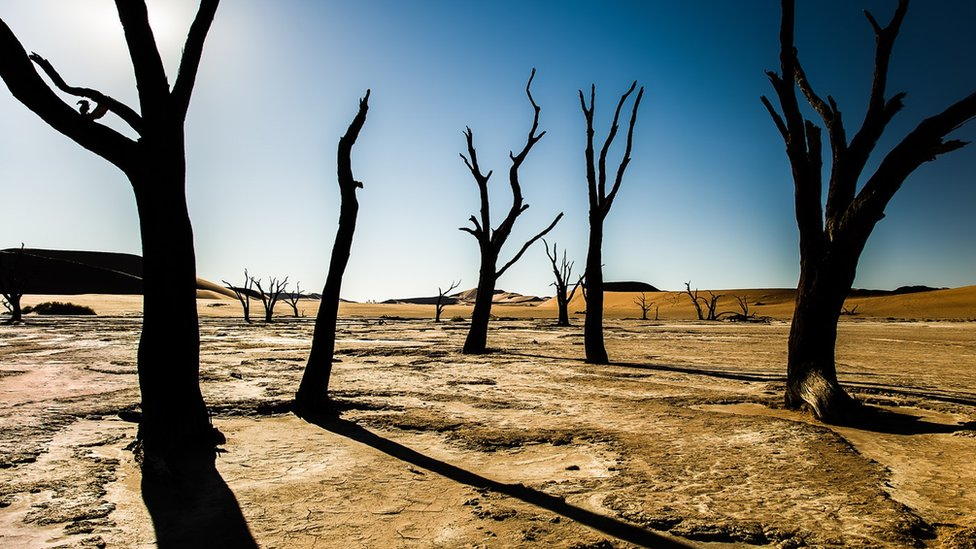 Trees in Deadvlei, Namibia