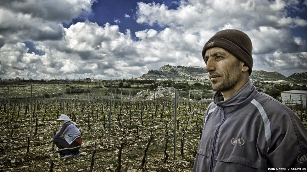 a worker at the Bargylus vineyard