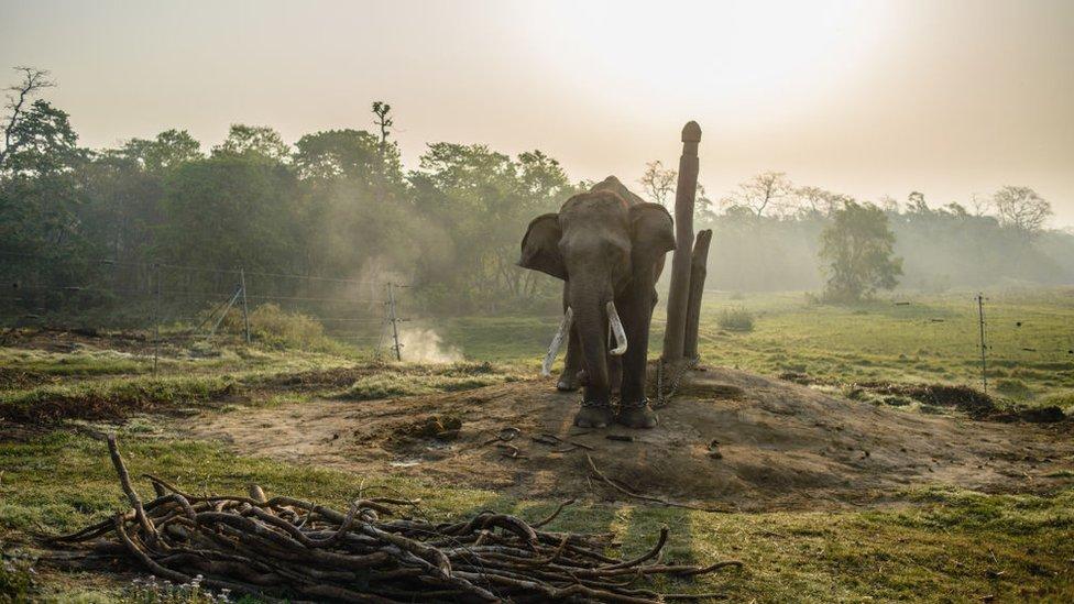NO USAR. BBC. elefante