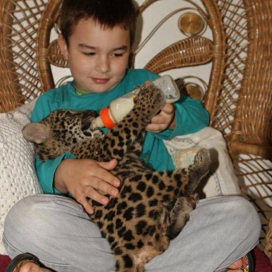 用瓶子餵幼豹