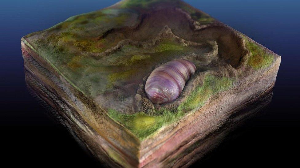 شكل توضيحي لكائن الإيكاريا واريوتيا في قاع المحيط