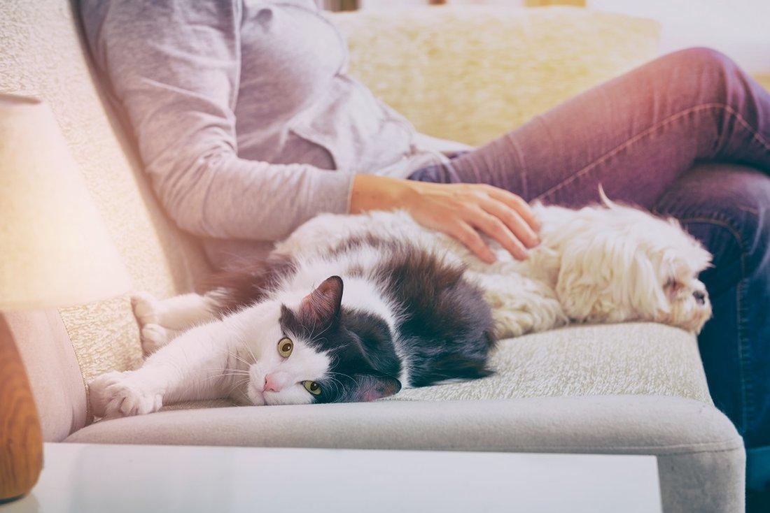 žena mazi mačku