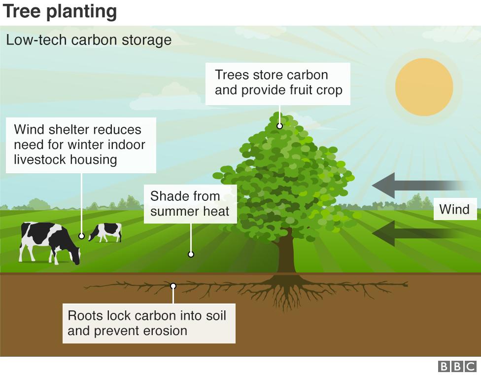 Chart on tree planting