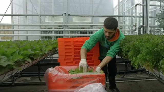 Man packing vegetables