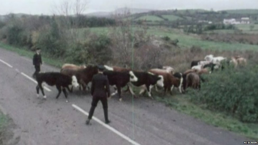 Policemen herding cows