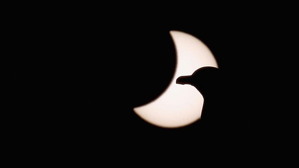 Pájaro durante eclipse solar parcial.