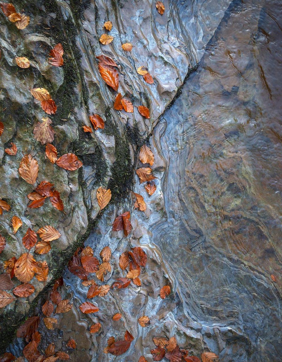 Chatelherault Parkı'nda çekilen bu sonbahar fotoğrafı, portfolyodaki üçüncü fotoğraftı