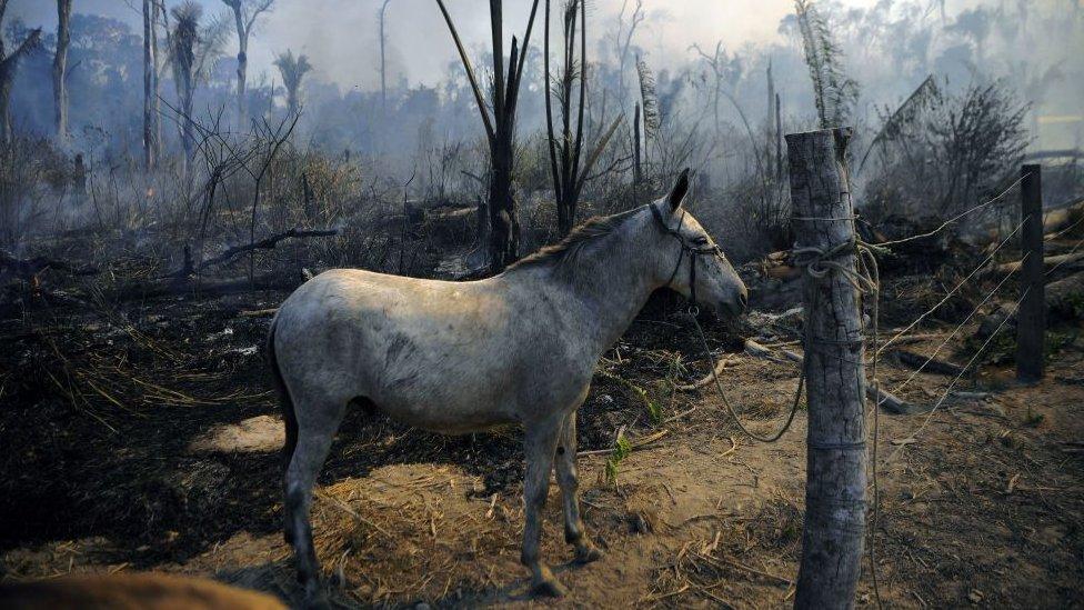 yangında bir at