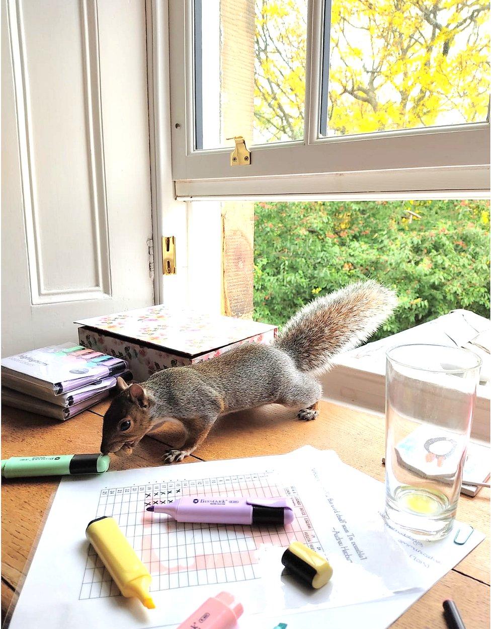 squirrel burglar