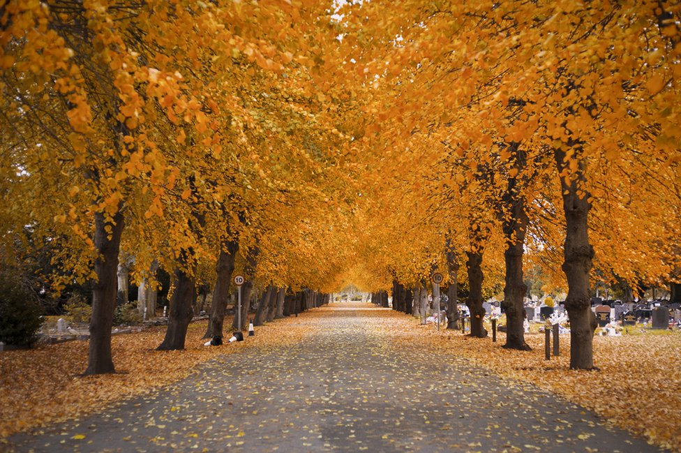 Autumnal trees lining a path