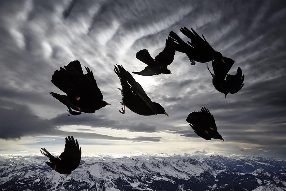 Bird image by Alessandra Meniconzi