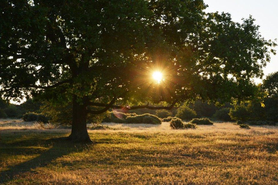 Sun shines through a tree