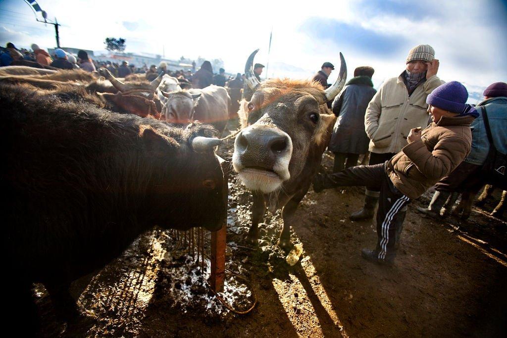 畜牧業是吉爾吉斯斯坦的重要產業。