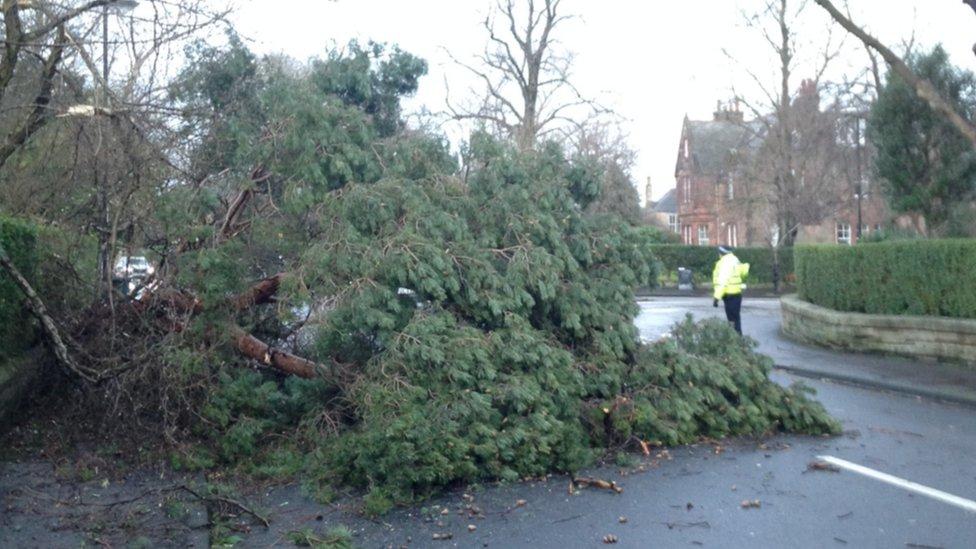 Tree blown onto road in Edinburgh