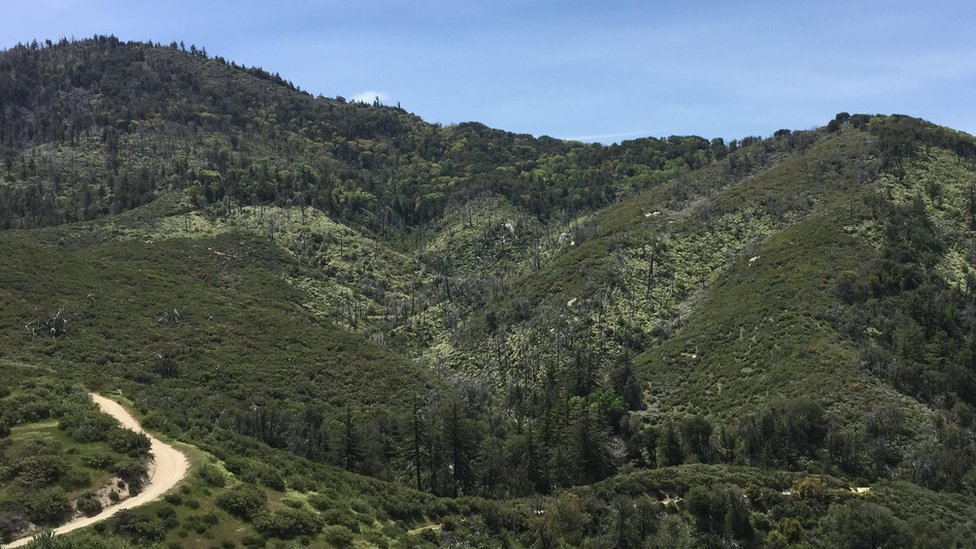 The majority of Cody's trees have died as California endured record-breaking temperatures