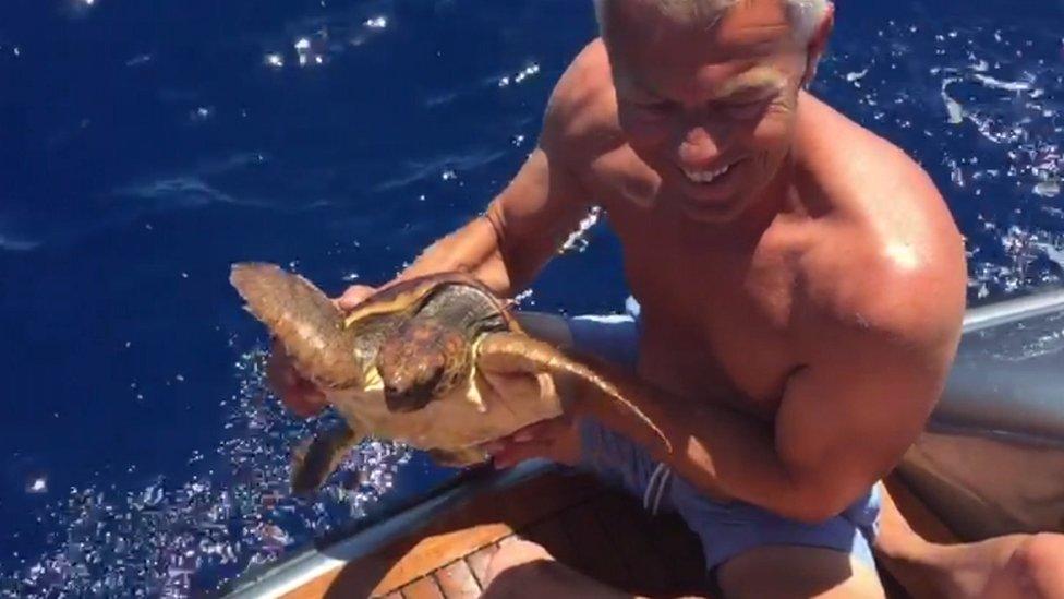 Ed sa kornjačom