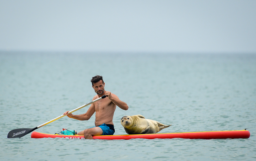 A man and a seal on a paddle board