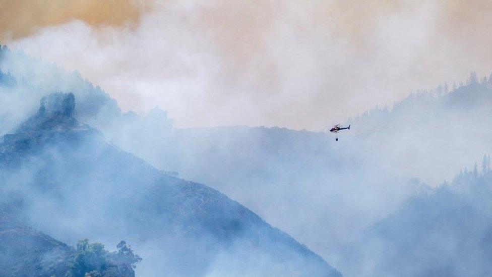 Helicóptero volando sobre el bosque