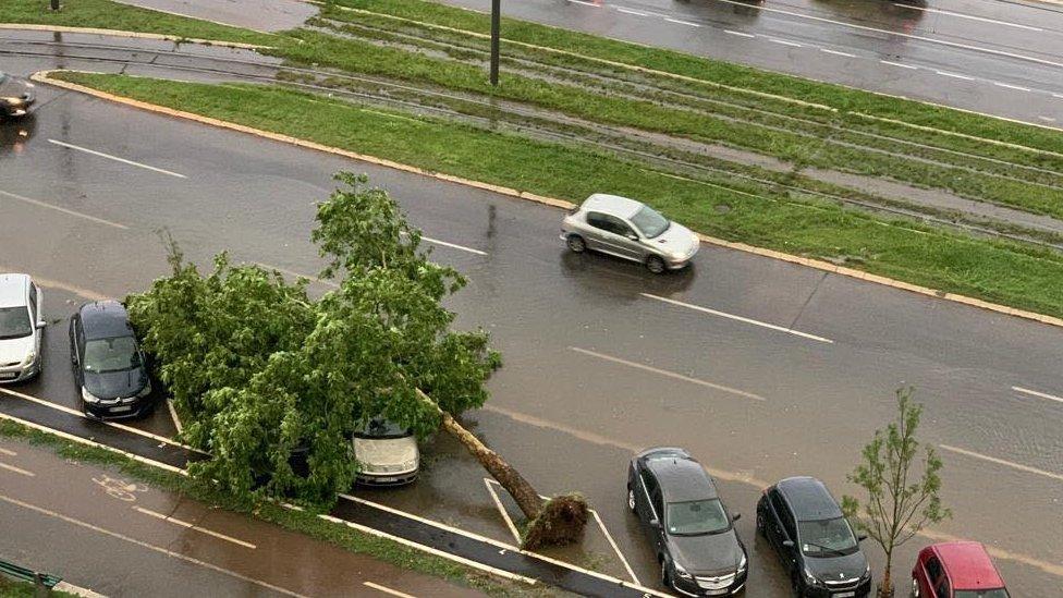oluja oborila drvo