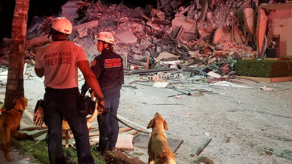 Equipo de rescate con sus perros.