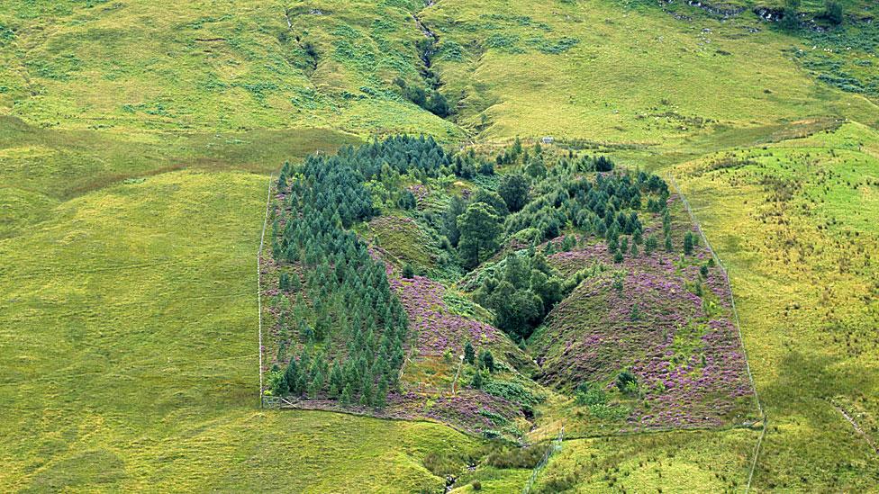 Paradera en Escocia con una exclusión en la que crecen árboles y flores.