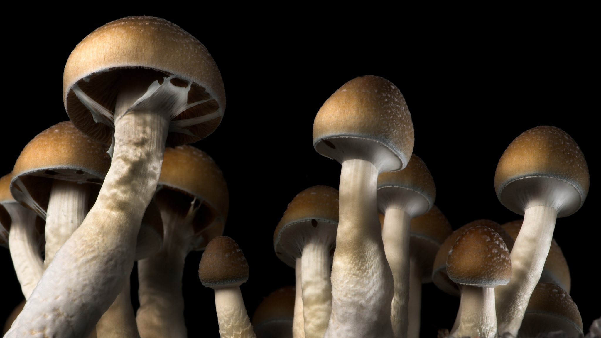 Magic mushrooms can 'reset' depressed brain