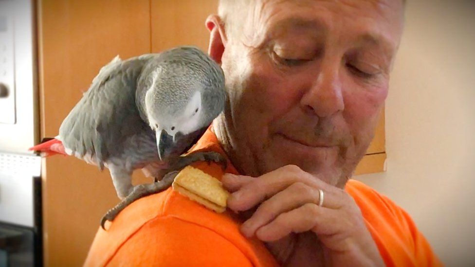 Sutton-in-Ashfield man scales 45ft tree to rescue parrot