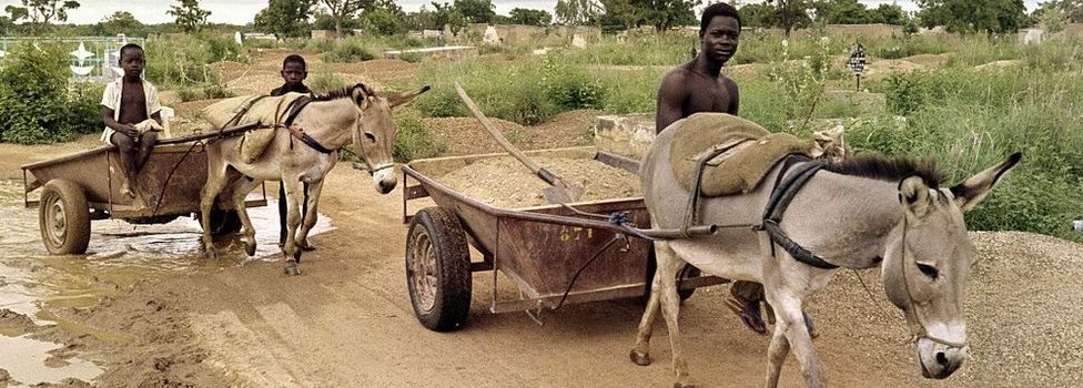 Donkeys pull wheelbarrows as villagers cross a muddy path, on August 3, 1988 in Ouagadougou,