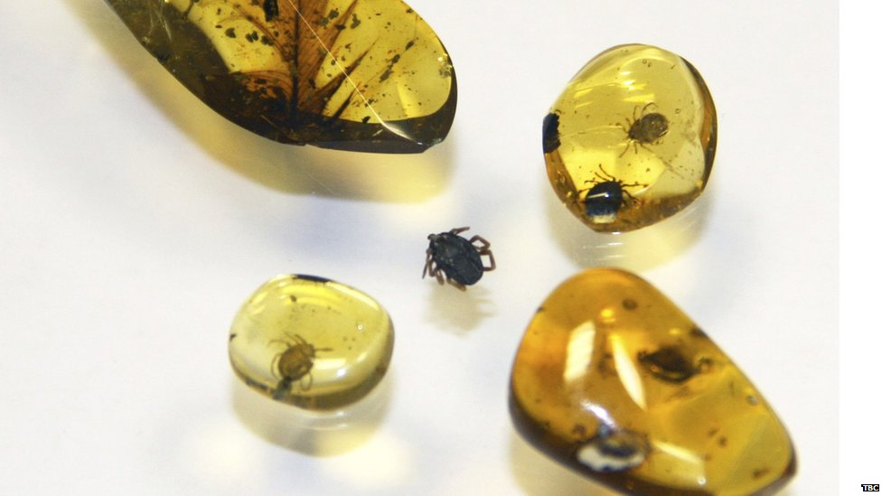 Amber fossils