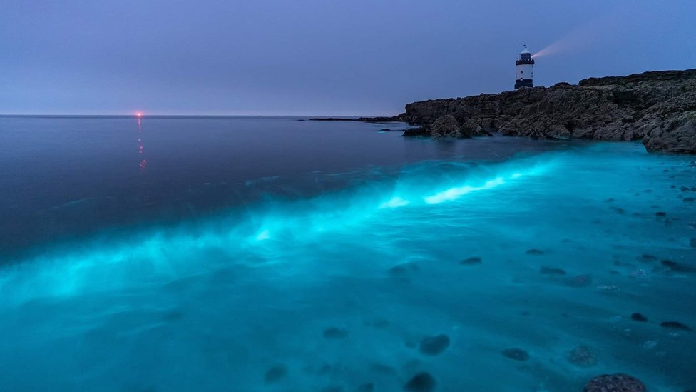 Bioluminescent Plankton Hunters Capture Magical Glow Bbc News