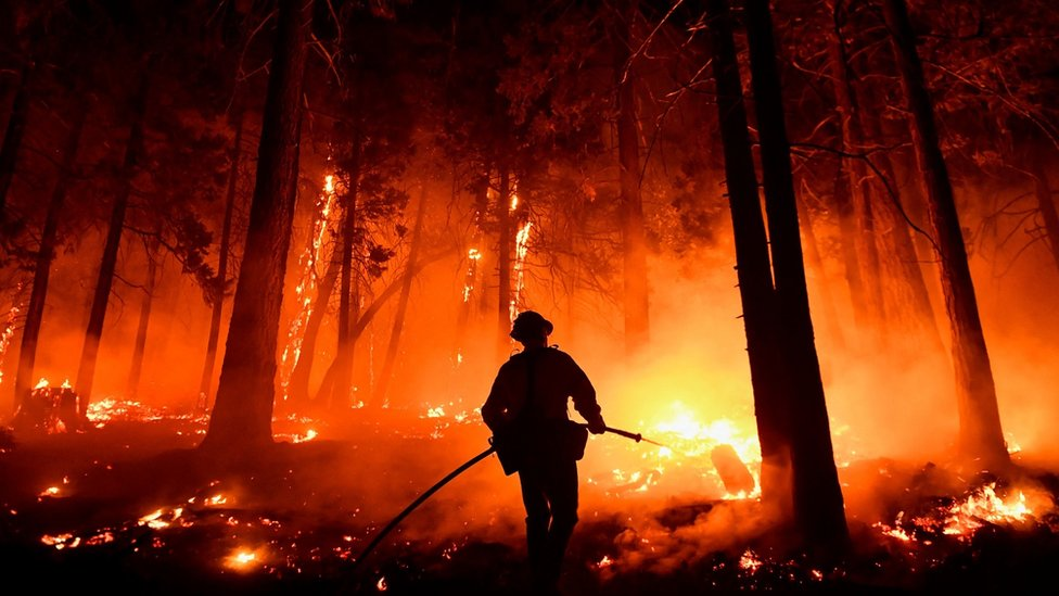 "Požar u nacionalnom parku ""Sekvoja"" u avgustu 2021"