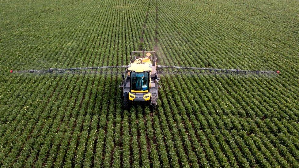 Una parcela siendo rociada con pesticidas