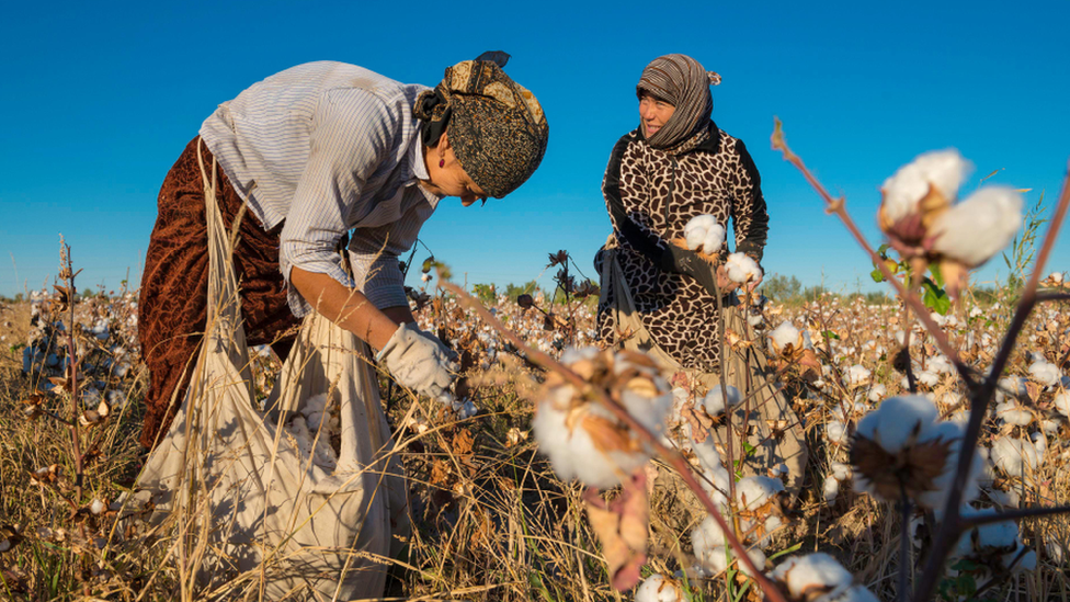 Uzbek women picking cotton